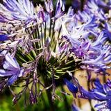 Piękny purpura kwiat w świetle słonecznym obrazy royalty free