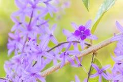 Piękny purpura kwiatu bukieta tło Fotografia Stock