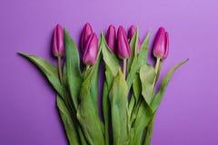 Piękny purpurowy tulipanowy tło tulipany purpurowych Obrazy Royalty Free