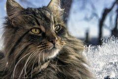 Piękny puszysty kot ogrzewają na nadokiennym parapecie na zimnym zima dniu zdjęcie stock