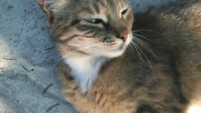 Piękny puszysty kot z zielonymi oczami zbiory
