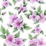 Piękny różany biodro kwitnie z liśćmi na białym tle bezszwowy kwiecisty wzoru adobe korekcj wysokiego obrazu photoshop ilości obr royalty ilustracja