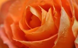 Piękny różany tło Fotografia Royalty Free