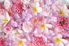 Piękny różowi kwiaty Zdjęcia Royalty Free