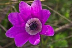 Piękni różowi dzwonkowi kwiaty Obrazy Stock