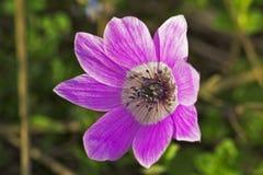 Piękni różowi dzwonkowi kwiaty Fotografia Stock