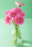 Piękny różowy gerbera kwitnie bukiet w wazie Obrazy Stock