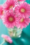 Piękny różowy gerbera kwitnie bukiet w wazie Zdjęcie Royalty Free
