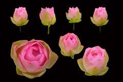 Piękny różowy lotosowy kwiat odizolowywający Zdjęcia Royalty Free