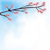 Piękny różowy Sakura kwiat Zdjęcie Stock