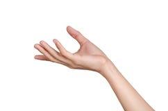 Piękny ręki mienie odizolowywa na białym tle Zdjęcia Royalty Free
