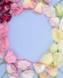 Piękny ramowy skład z eustoma kwitnie na koloru tle Fotografia Stock