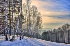 Piękny ranek zimy krajobraz w halnej brzozy i sosny lesie obraz stock