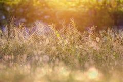 Piękny ranku światło w łące z bokeh w foregrou Obraz Stock