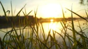 Piękny rośliny jeziora świt zdjęcie wideo