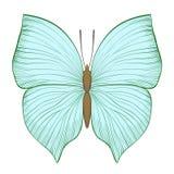 Piękny rocznik zieleni motyl odizolowywający na białym tle ilustracji