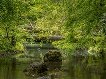Piękny rodzajowy naturalny strumienia tło z drzewami spadać przez i skałami, Pokojowy, idylliczny Kawałek przerastający zdjęcie royalty free