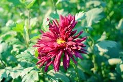 Piękny romantyczny kwiat obrazy royalty free