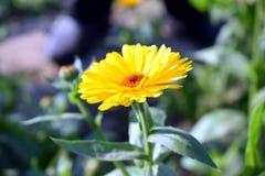 Piękny romantyczny kwiat fotografia stock