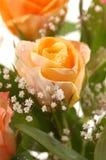 piękny rose żółty Zdjęcie Stock