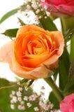 piękny rose żółty Obraz Royalty Free