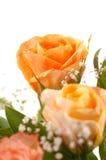 piękny rose żółty Obrazy Stock