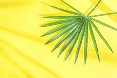 Piękny Round Spiky drzewko palmowe liść na Jaskrawym Żółtym tle w światło słoneczne przeciekach Odgórny Viw mieszkanie Lay Tropik Zdjęcie Royalty Free
