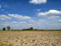 Piękny ryżu pola krajobraz z niebieskim niebem fotografia stock