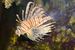 piękny rybi tropikalny zdjęcia royalty free