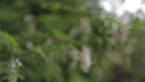 Piękny słońce połysk przez dmuchania na wiatrowej drzewo zieleni opuszcza zdjęcie wideo