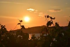Piękny słońce ustawiający na morzu patrzeje przez liści drzewo obraz royalty free