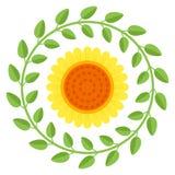 Piękny słonecznik odizolowywający na białym tle Obraz Stock