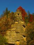 Piękny słoneczny dzień w jesień złotym lesie fotografia royalty free