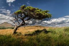 Piękny samotny drzewo w polu fotografia royalty free