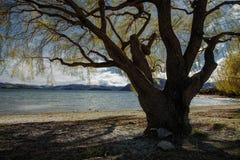 Piękny sceniczny jeziorny wanaka najwięcej popularnego podróżnego destinati obrazy stock