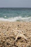 piękny seashell na małej otoczak plaży Obraz Royalty Free