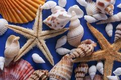 Piękny Seashell tło Obraz Royalty Free