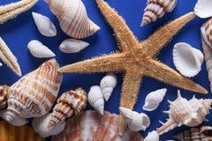 Piękny Seashell tło Obraz Stock