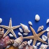 Piękny Seashell tło Zdjęcie Royalty Free