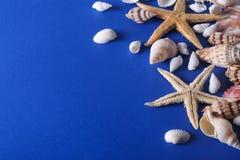 Piękny Seashell tło Zdjęcia Stock
