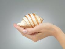 Piękny seashell w żeńskiej ręce Zdjęcia Stock