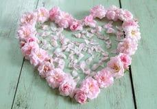 Piękny serce menchii róża Zdjęcia Royalty Free