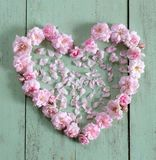 Piękny serce menchii róża Obrazy Stock