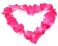 Piękny serce menchii róży płatki odizolowywający na bielu obrazy royalty free