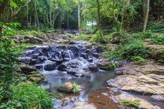 Piękny siklawa w obywatel zieleni lesie fotografia stock
