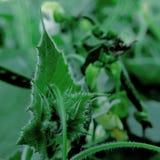 Piękny skupiający się I Naturalny liść w zimnie zdjęcia stock