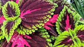 Piękny skutek kolorowi liście fotografia royalty free