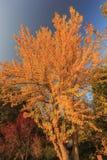 Piękny spadku kolor nad Dębowym roztoka terenem zdjęcie stock