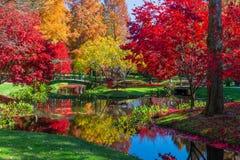Piękny spadku ulistnienie przy Japońskimi ogródami w Gruzja obraz stock