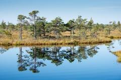 Piękny spokojny krajobraz mglisty bagna jezioro fotografia stock